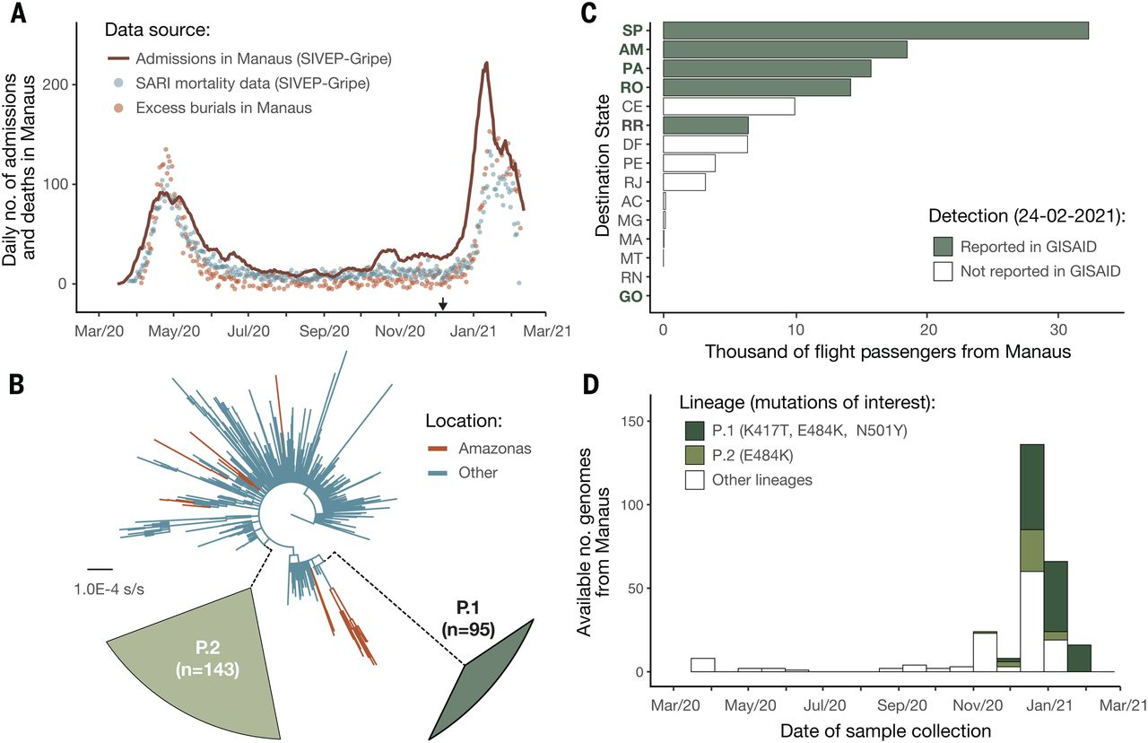 Esporte Genomics and epidemiology of the P.1 SARS-CoV-2 lineage in Manaus, Brazil